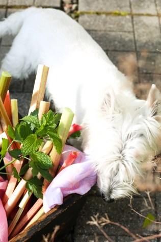 sneaky-rhubarb-mint-2