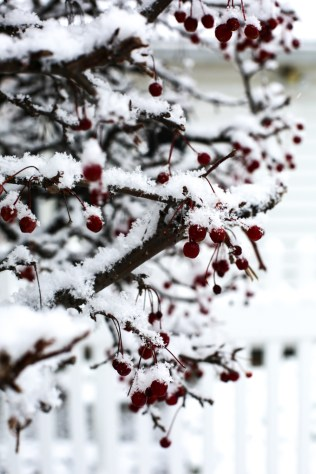 snow-berry-112