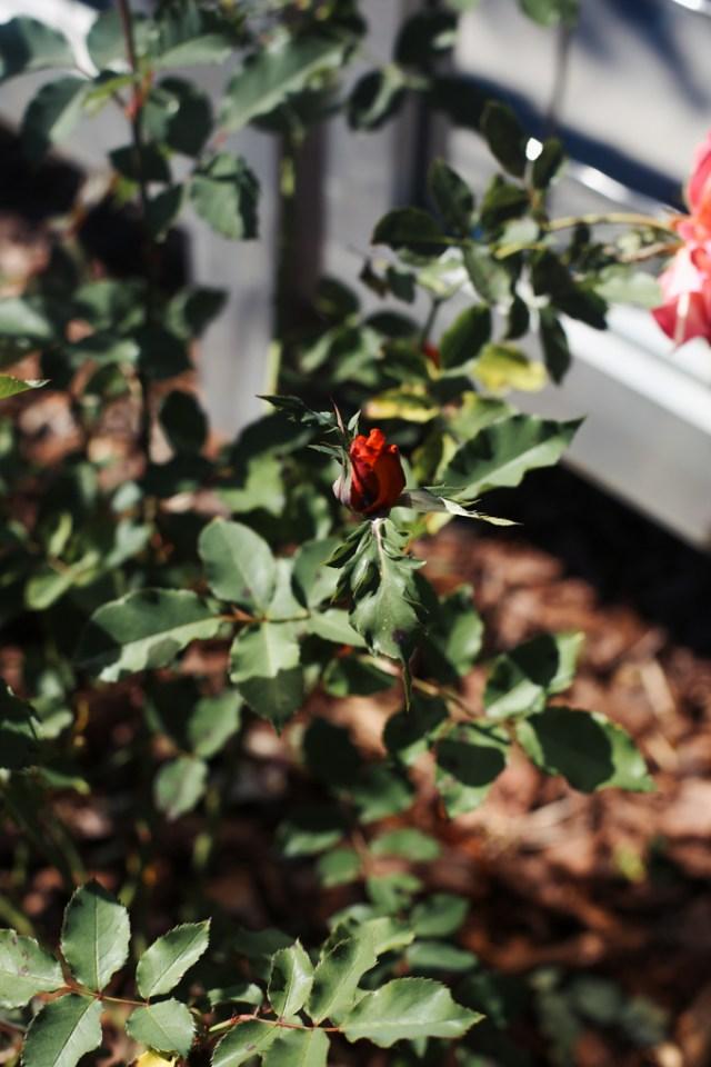 rose-garden-naples-1