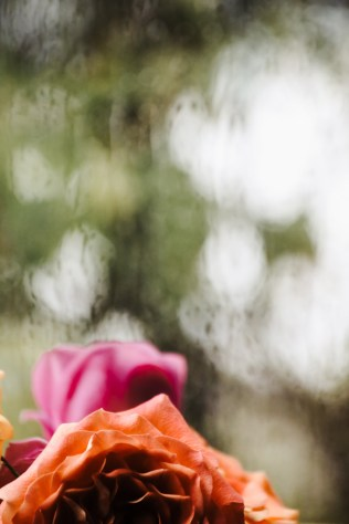 roses-rain-1
