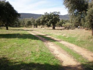 Caminos y veredas