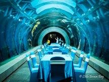 Restaurant with Aquarium Tunnel