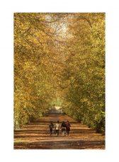 IMG_1532 Autumn 5