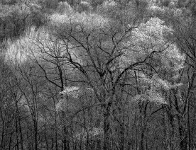 Forest in Early Spring — Watchung Mtns. NJ © jj raia