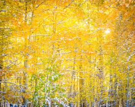 Autumn Aspens and Sunburst - Uncompahgre National Forest, CO © jj raia
