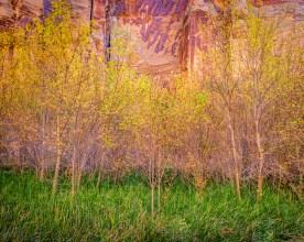 Calf Creek Canyon - Grand Staircase NP, UT © jj raia