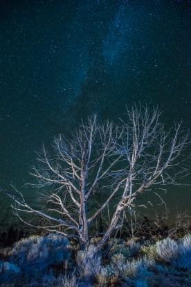 Milky Way and Snags - Grand Canyon, AZ © jj raia