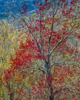 Spring Hillside No.1 - Blue Ridge Parkway, NC © jjraia
