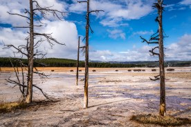 Lower Geyser Basin © jj raia
