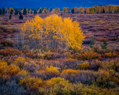 Willow Flats — Grand Teton NP © jj raia
