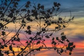 Pastel Silhouette — © jj raia