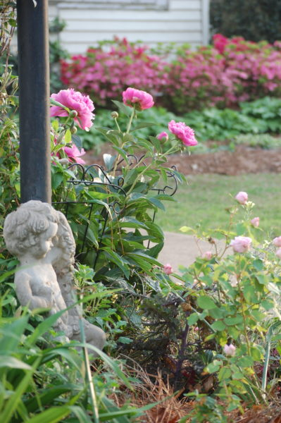 Our small corner bed on the front walk welcomes you to our home. April blooms include peonies.