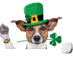 St-Patrick-s-Day-Dog-51700387