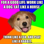 work like a dog think like a fox