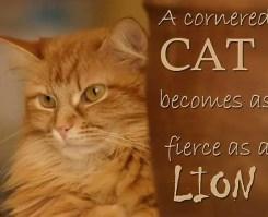 cornered cat
