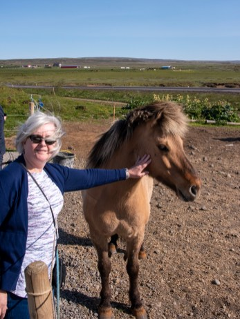 Kathleen gets to meet an Icelandic horse
