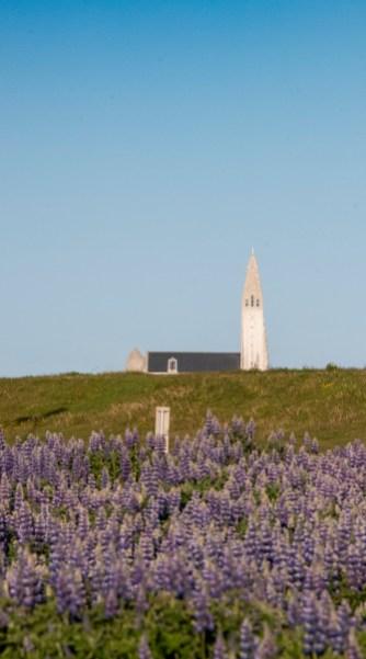 Hallgrímskirkja—this church dominates the Reykjavik skyline