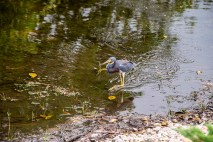 And a heron