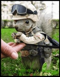 military humor5