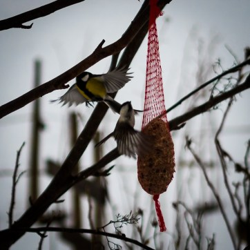 bird_feeding_2