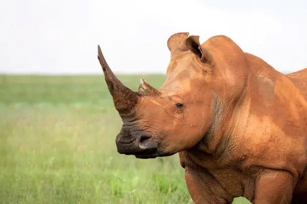 Safaris and Wildlife