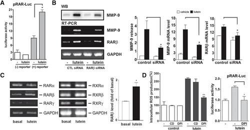 The carotenoid lutein enhances matrix metalloproteinase‐9