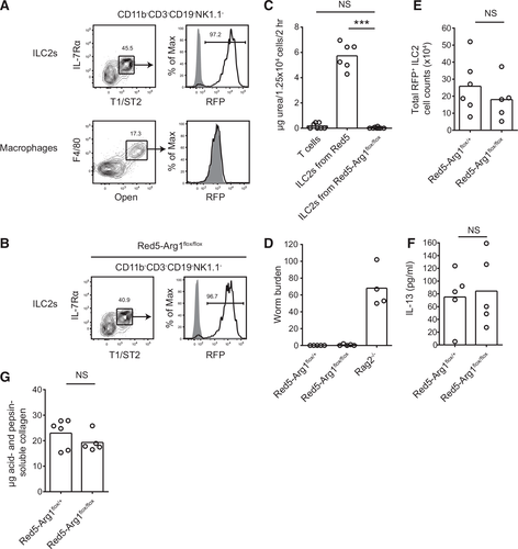Type 2 innate lymphoid cells constitutively express