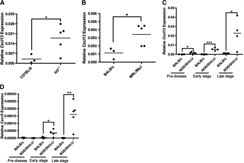 CXCL13 is elevated in Sjögrenˈs syndrome in mice and