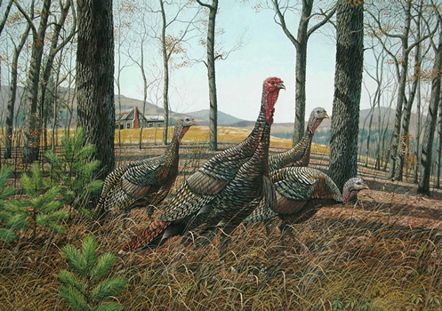 Wild_Turkey_(Cabin)