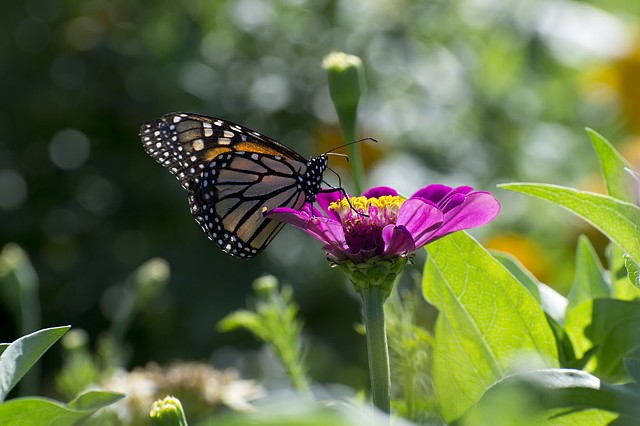 Butterfly by Missy