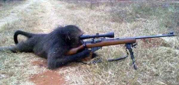 ape with rifle
