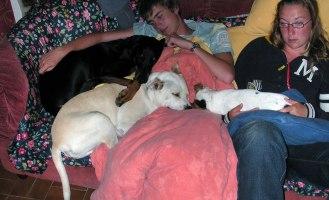 Sleeping Buddies - Rasta, Mozes and Garlic
