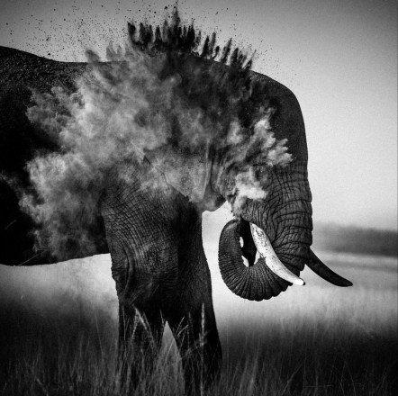 Dust Explosion / Photo Credit: Laurent Baheux