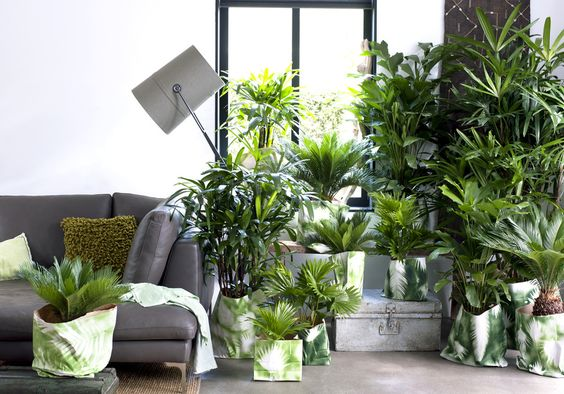 woonplant van februari exclusieve palmen