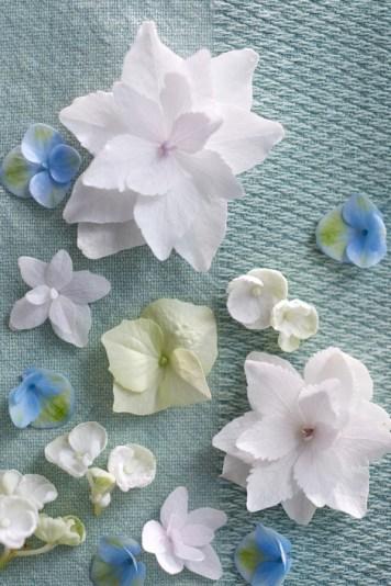 hortensia woonplant van april