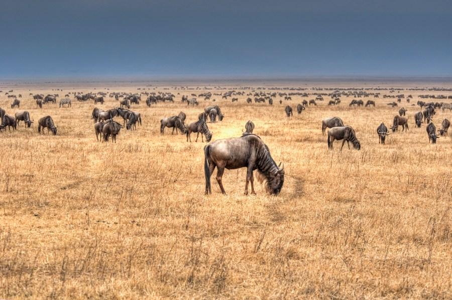 JLMTRAVEL-serengeti-ngorongoro-03