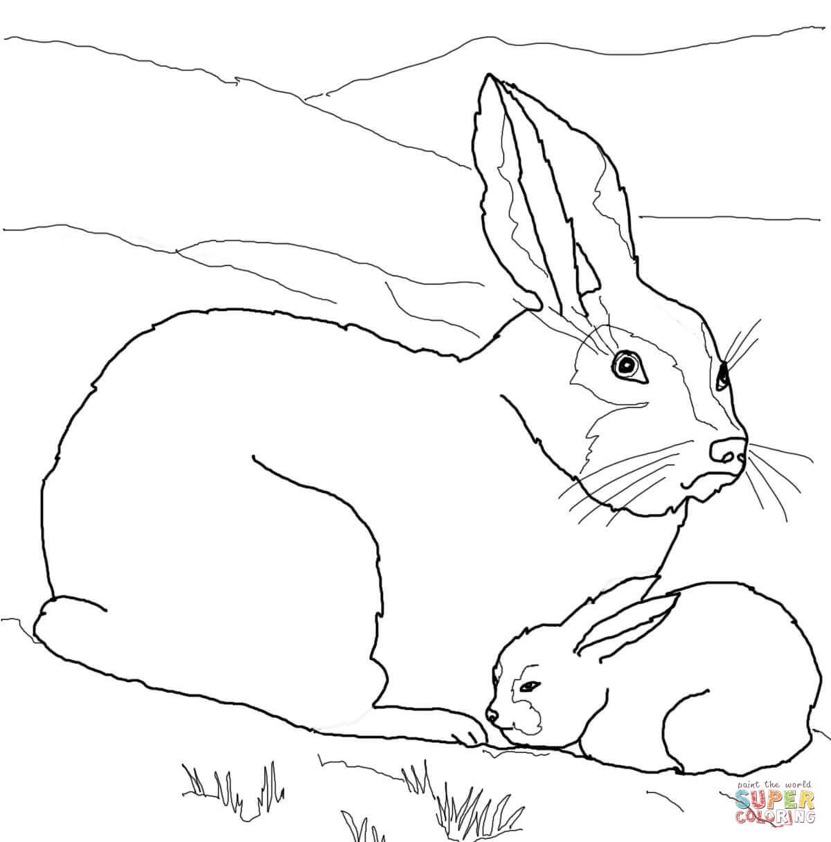 Jack Rabbit Clipart Arctic Hare