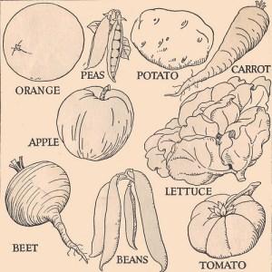 vegetables drawn easy vegetable drawings line sketches
