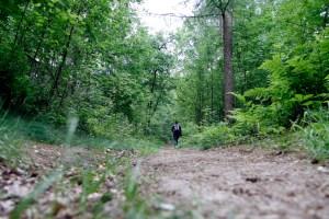 Het eerste stuk loopt door het bos.