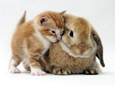 ✔ Keistimewaan Kucing