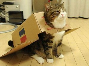 gambar kucing lawak