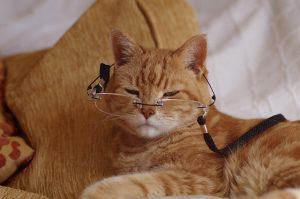 keperluan nutrisi makanan kucing usia tertentu