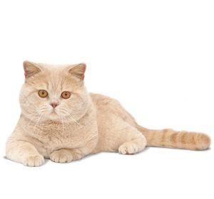 Keperluan nutrisi makanan kucing pada usia tertentu