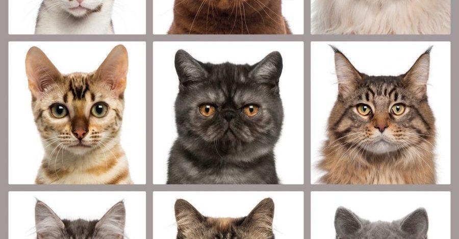✔ Baka-baka Kucing