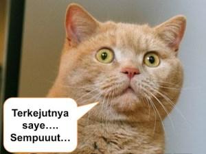 koleksi gambar kucing lucu