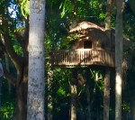 House in a tree