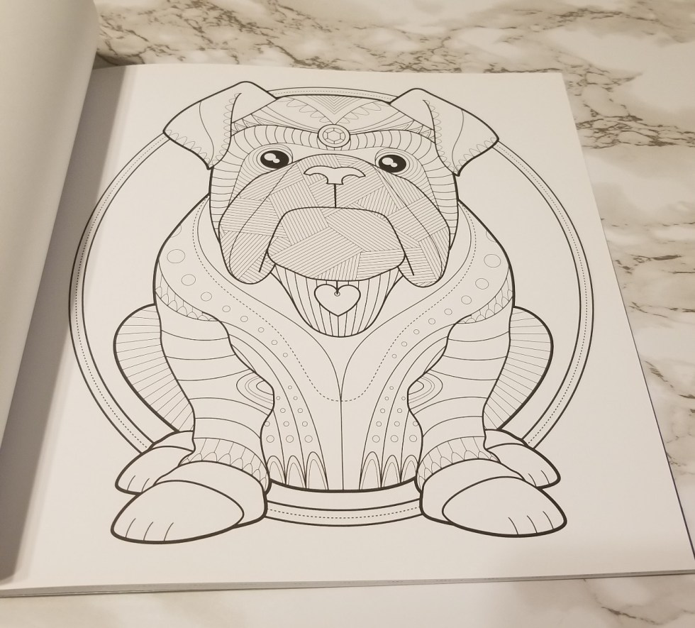 Bulldog to color