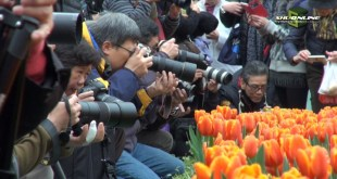 攝影人士爭相拍攝以鬱金香鋪成的花海。(影片截圖)