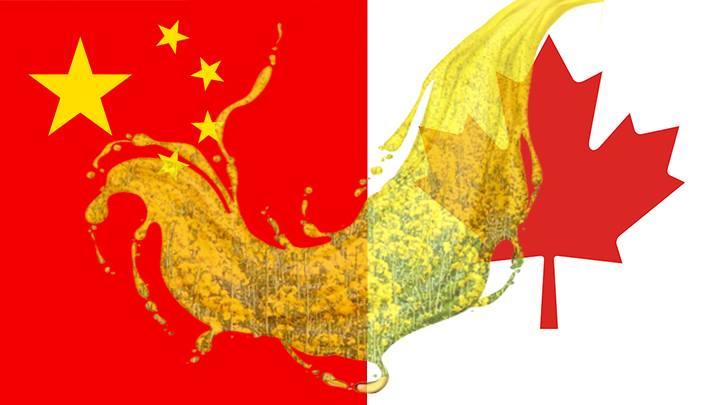 中國海關總署於3月1日公布新的註冊進口商名單顯示,加拿大主要農業企業理查森國際公司(Richardson International Ltd)已被吊銷進口芥花籽的註冊許可。(本網製圖)