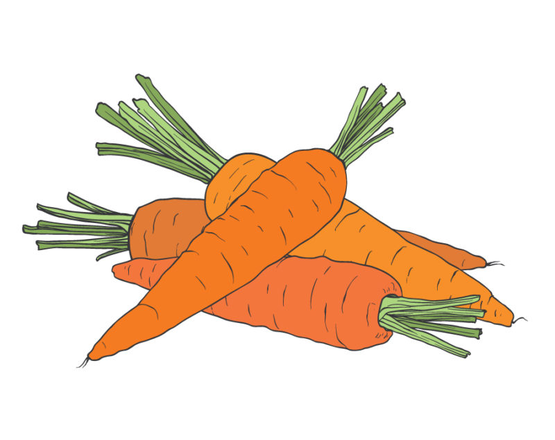 absolude-illustrations_carrots